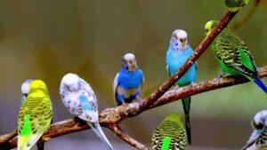 kuşlarda kullanılan vitaminler