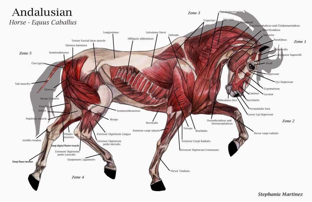 at anatomisi3