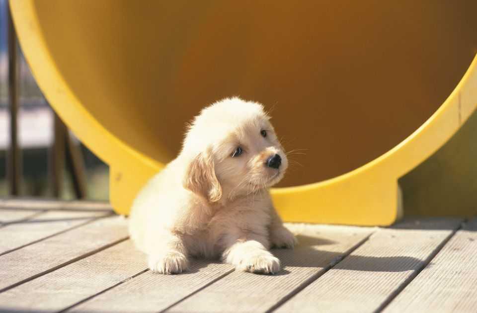 çocuklar için en iyi köpek ırkı nedir?