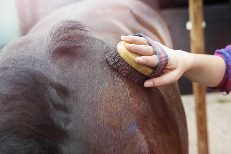 bakımdan hoşlanmayan atlara nasıl davranılmalıdır?