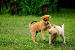 köpek saldırıları ile nasıl mücadele edilir?