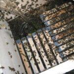 Arılara Neden Şerbet Verilir? Şerbet Balın Kalitesini Etkiler mi?