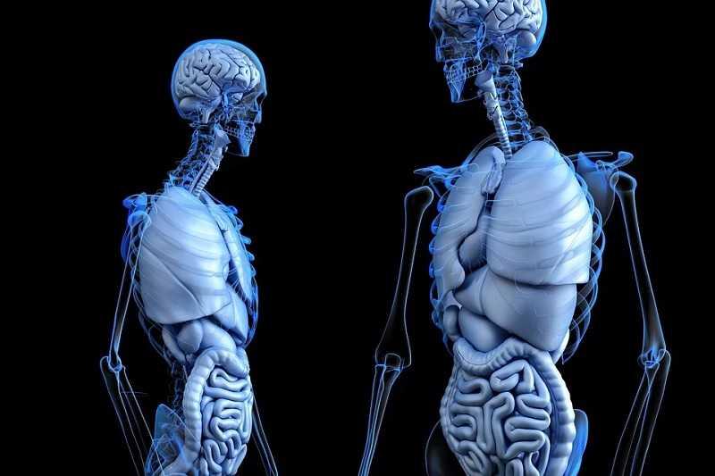 anatominin tanımı