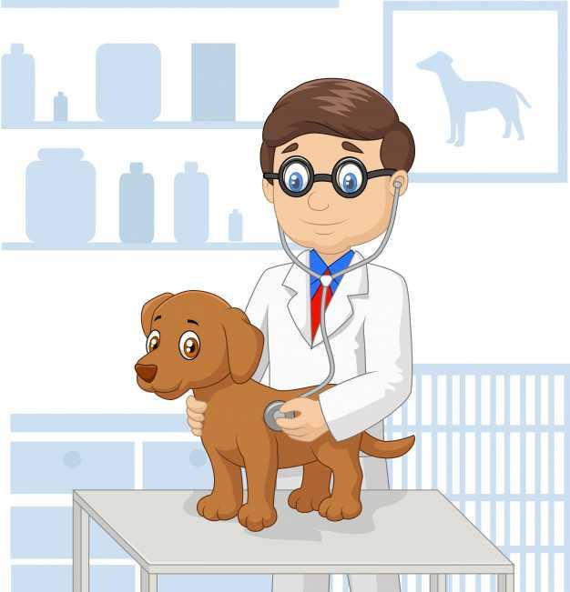 veteriner klinikleri