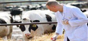 veteriner sağlık hizmeti